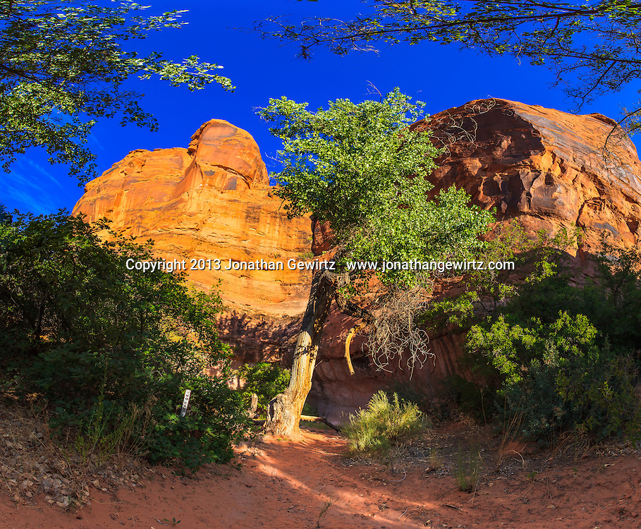 Panoramic view of a shaded campsite adjacent to the red rock walls of the Colorado River canyon near Moab, Utah.<br /> <br /> WATERMARKS WILL NOT APPEAR ON PRINTS OR LICENSED IMAGES.
