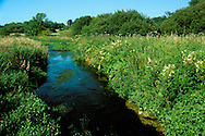 Lowland Stream