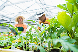 Green plants growing with gardeners in the background, Augsburg, Bavaria, Germany