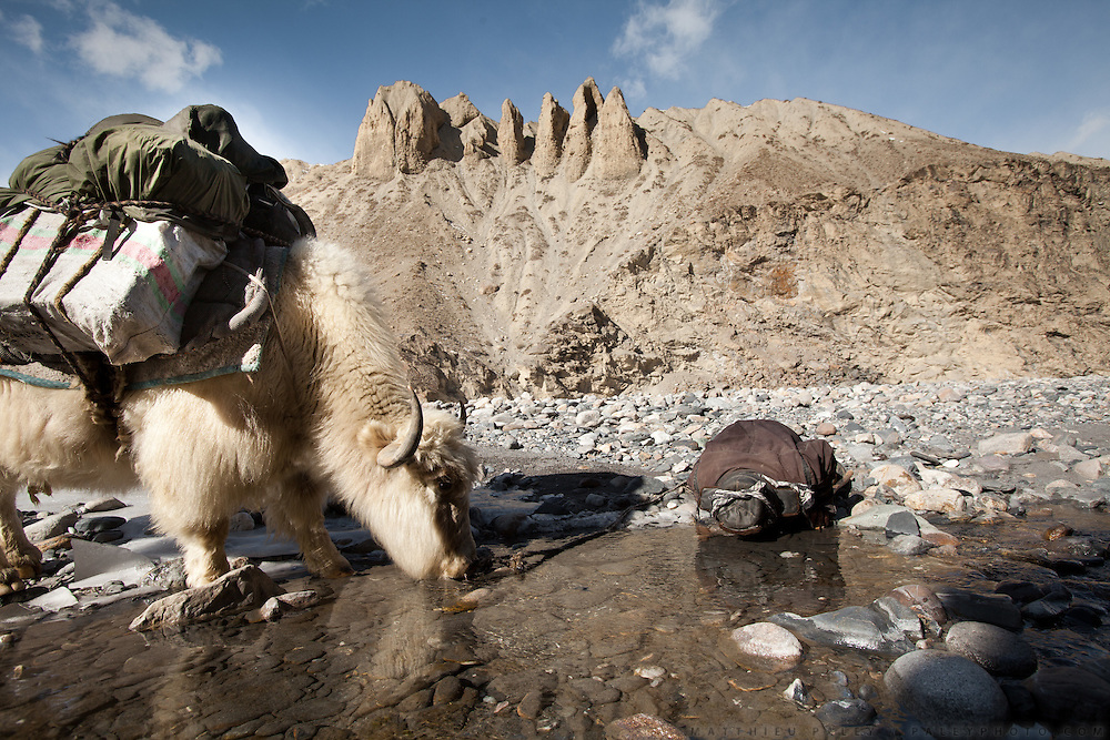 A yak and its owner share a drink straight out of the river, on the way up to the Pamir plateau..Between Zard-e Bar shepherd house and Sarhad village. Going back down to Sarhad village with a yak caravan led by 2 Wakhi traders: Shur Ali and Roz Ali...Trekking down the Wakhan frozen river, the only way down to leave the high altitude Little Pamir plateau, home of the Afghan Kyrgyz community.