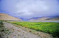 The sun lights up a unusually green patch of tall grass in the Tibetan countryside.