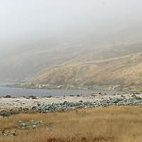 Tussock grass surrounds a cove on New Island, Falkland Islands.