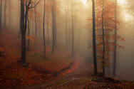 Misty autumn beech forest in Central Balkan Mountains