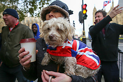 © Licensed to London News Pictures. 09/01/2019. London, UK. A dog wrapped in a Union Jack flag by pro-Brexit  protesters outside the Houses of Parliament on the first day of the Meaningful Vote debate. At the end of the five day debate the MPs will vote on Prime Minister, Theresa May's Brexit deal. Photo credit: Dinendra Haria/LNP