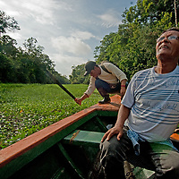 Indian guides hack through water hyacinth as they look for birds above the Yanayacu River in Peru's Amazon Jungle.