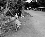 """Homeless dogs of Los Machos Beach, Puerto Rico. These are """"Satos,"""" a Puerto Rican slang for street dog."""