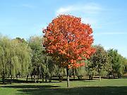 Fall at Pelham Bay Park