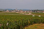 Vineyard. View to Meursault Perrieres and Meursault village. Puligny Montrachet, Cote de Beaune, c d'Or, Burgundy, France
