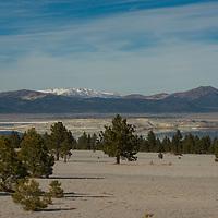 Jeffrey Pines (Pinus jeffreyi) grow in volcanic ash along the semi-arid shores of Mono Lake in the eastern Sierra Nevada of California.