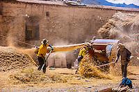 Threshing barley, near Dagze, Tibet (Xizang), China.
