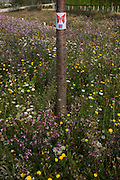 An image of a butterfly is attached to a young tree trunk surrounded by wild flowers in the Olympic Park during the London 2012 Olympics. London's Olympic Park, at just under a square mile, is the largest new park in the city for more than 100 years. The planting of 4,000 trees, 300,000 wetland plants and more than 150,000 perennial plants plus  nectar-rich wildflower make for a colourful setting for the Games. This land was transformed to become a 2.5 Sq Km sporting complex, once industrial businesses and now the venue of eight venues including the main arena, Aquatics Centre and Velodrome plus the athletes' Olympic Village. After the Olympics, the park is to be known as Queen Elizabeth Olympic Park.