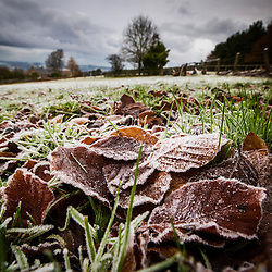 Borders Frost