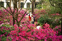Stock photo of visitors to Bayou Bend enjoy the azalea trails.
