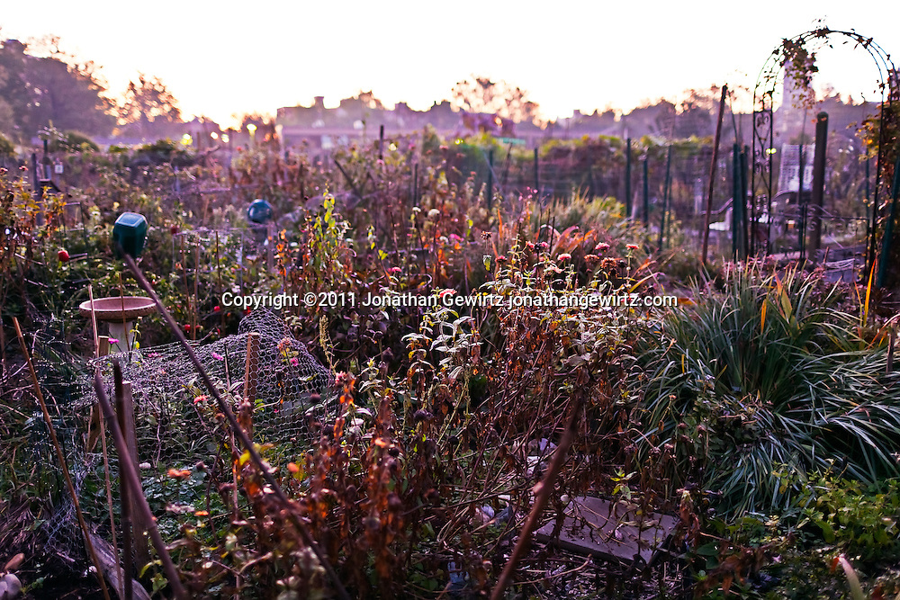 Sunrise at a community garden. WATERMARKS WILL NOT APPEAR ON PRINTS OR LICENSED IMAGES.