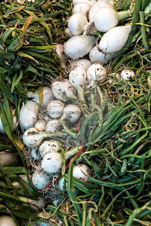 Fresh Mexican green onions at Benito Juarez market in Oaxaca, Mexico.
