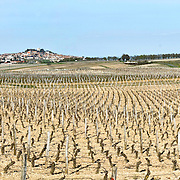 Vineyard at Sancerre in the Loire Valley