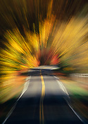 Image of a road (zoom effect) in Olympic National Park, Washington, Pacific Northwest by Randy Wells
