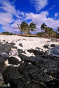 Coconut palms on coral and lava beach at Lapakahi State Historical Park, Kohala Coast, The Big Island, Hawaii