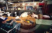 Harrisburg, PA, Cattle, Pennsylvania State Farm Show