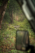 Landscape with view of a green forest during a rain from a safari car window, Lake Manyara National Park, Tanzania