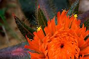 Chapada Gaucha_MG, Brasil...Flor conhecida como Paratudo (flor do cerrado) no Parque Nacional do Grande Sertao Veredas...The flower Tabebuia aurea in the Grande Sertao Veredas National Park...Foto: JOAO MARCOS ROSA / NITRO