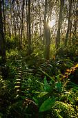Everglades and Florida Keys