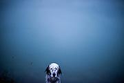"""English Setter Welpe """"Rudy"""" am 04.11. 2017 in herbstlicher Stimmung am Teich von Stara Lysa, (Tschechische Republik).  Rudy wurde Anfang Januar 2017 geboren und ist vor einiger Zeit zu seiner neuen Familie umgezogen."""