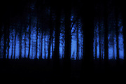 Dark atmospheric and blue forest at dawn