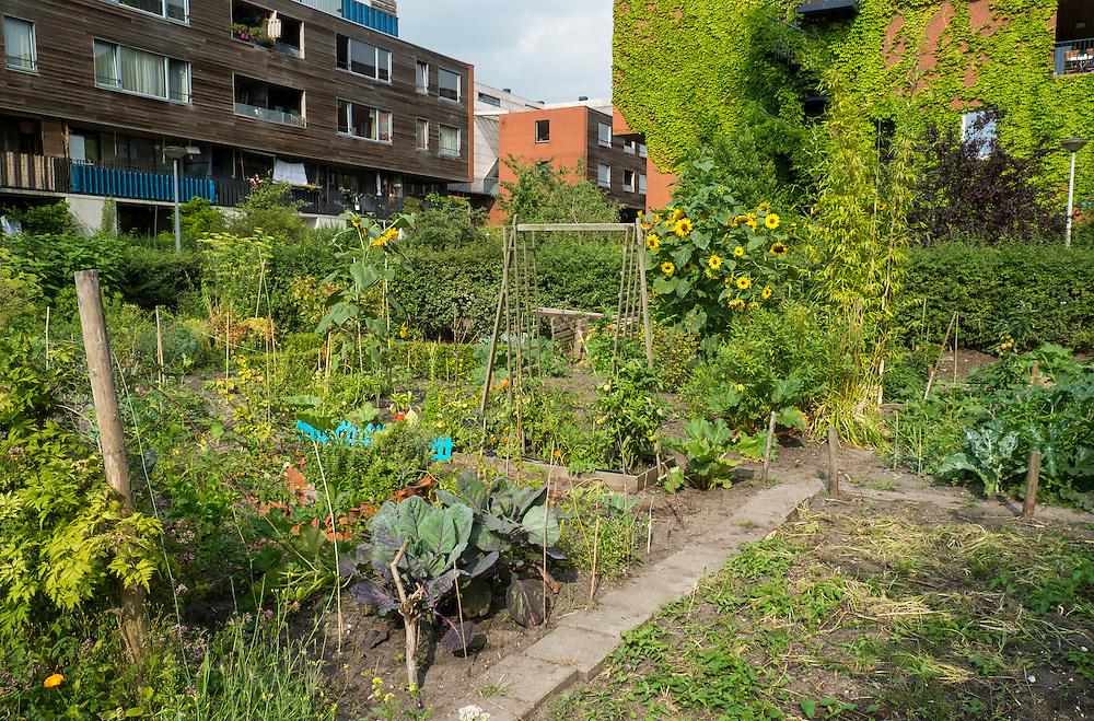 Nederland, Amsterdam, 21 aug 2013<br /> Woonwijk bij het Westerpark. Muren van huizen zijn mooi begroeid met klimop. Tussen de woonblokken zijn tuintjes van de mensen die daar soms ook groente verbouwen zoals sla, prij en andere groenten en bloemen<br /> Foto(c): Michiel Wijnbergh