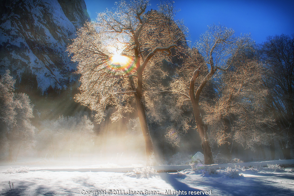 Late afternoon light through an ice-covered tree in Yosemite Valley, Yosemite National Park, California.