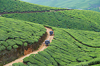 Inde, Etat du Kerala, Munnar, plantation de the // India, Kerala state, Munnar, tea plantations