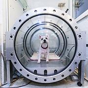 Dog life in Singapore