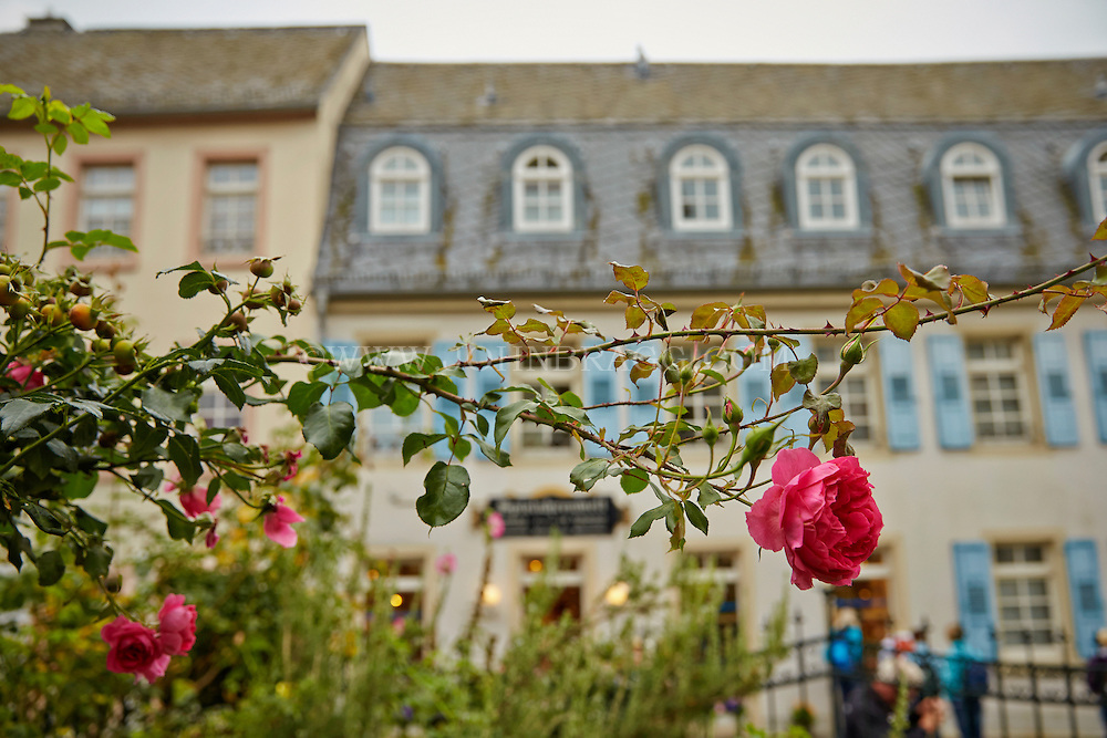 View of a red rose bush, and the MusicBox World Museum faded into the background, Rüdesheim, Germany (Horizontal).