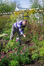 Feeding a border with Growmore fertiliser in spring