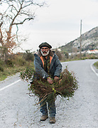 A man named Manolis picking wild herbs to feed his rabbits at home. In and around the village of Meronas.