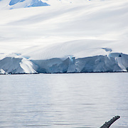 A humpback whale waves a fin in Fournier Bay on the western coast of the Antarctic Peninsula.