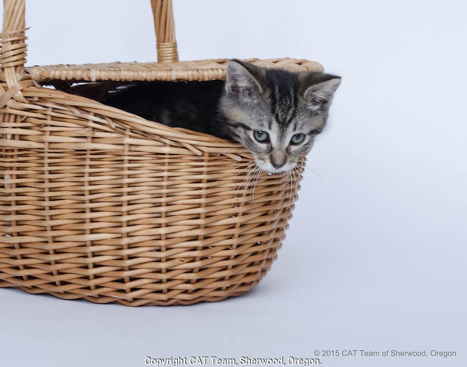 Young black striped kitten peeking out from inside basket