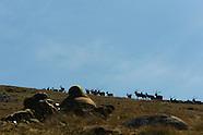 Scotland Stag Hunt