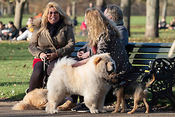 © Licensed to London News Pictures. 22/11/2020. London, UK. Dog owners sitting on a bench enjoy the sunshine on a Sunday afternoon in Hyde Park during the second Covid-19 lockdown. Photo credit: London News Pictures