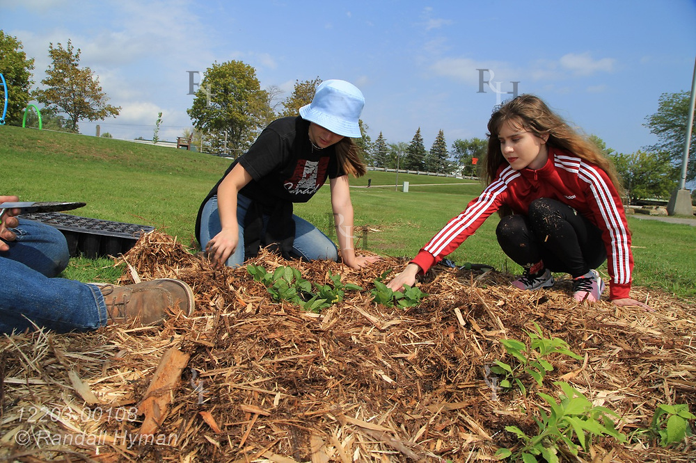 High school environmental sciences students plant wildflowers in bioswale of rain garden at River Side Park in Au Gres, Michigan.