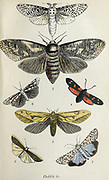 Plate II 1. Wood Leopard. 2. Goat Moth. 3. Ghost Moth. 4. Five Spot Burnet. 5. Large Footman. 6. Speckled Footman. from the book ' The common moths of England ' by Wood, J. G. (John George), 1827-1889 Publication date 1878 in London : by G. Routledge and Sons