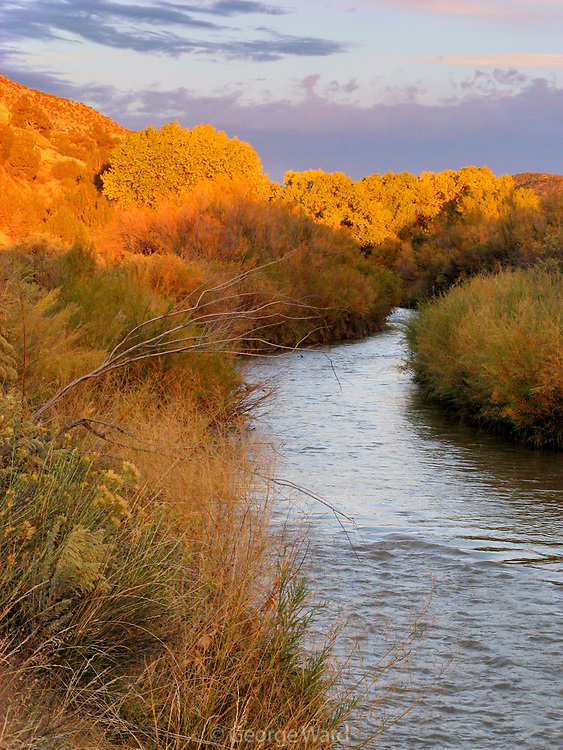 McElmo Creek and Fall Color, Montezuma County, Colorado