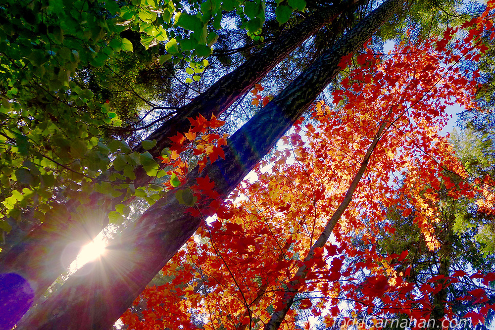 Autumn colors in a western forest