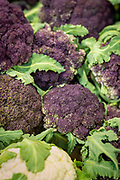 Purple Sprouting Broccoli x Collards, Brassica oleracea Breeder: John Navazio, Johnny's Selected Seeds<br /> Farmers: Midori Farm and 47th Avenue Farm<br /> Chef: Maya Lovelace, Mae and Yonder