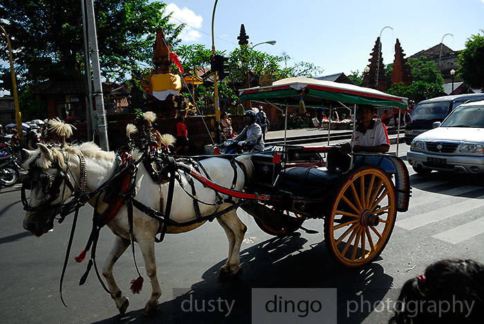 Traditional horse-drawn cart, a dokar, in Denpasar, Bali. The dokar's numbers are rapidly declining due to competition from motorbikes. Denpasar, Bali, Indonesia.