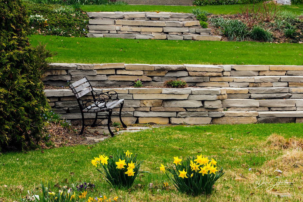 Gallie/McCreath Residence gardens- stone walls and daffodils, Greater Sudbury, Ontario, Canada