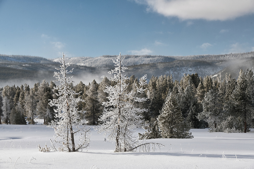 Frost laden trees adorn a field of snow