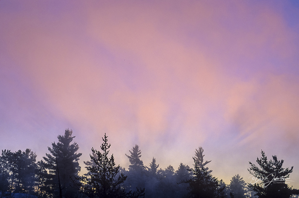 White pine shadows on fog rising from the Wanapitei R rapids at sunrise, Greater Sudbury, Ontario, Canada
