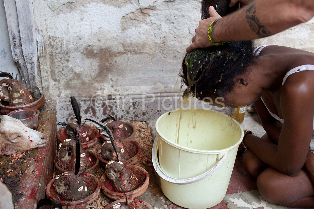 A herbal mixture is used to cleanse the heads of those being initiated. The mixture is prepared by hand for a long time, the idea being that it will encase the positive, cleansing energy from those preparing it. Santeria is a syncretic religion practiced in Cuba, it is a mixture of Yoruba tribal practices brought from Nigeria during Colonial times, and traditional Catholic beliefs. During this time, the slaves used the images of saints to cover up their worship of the Orishas (spirits).