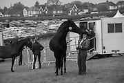 MANDY O''NION  BEING NUZZLED BY HER HORSE FEDERAL YAF, Heathfield Agricultural show. little tottingworth farm, broad oak, 28 May 2016